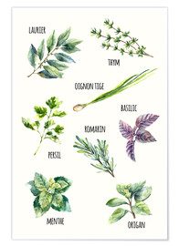 Poster  Les herbes aromatiques